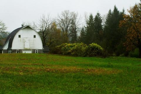 New Pasture on November 6th with Neighbors Barn